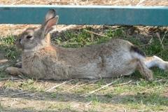 Zajímavou oslavu Velikonoc zažijete na Čabárně
